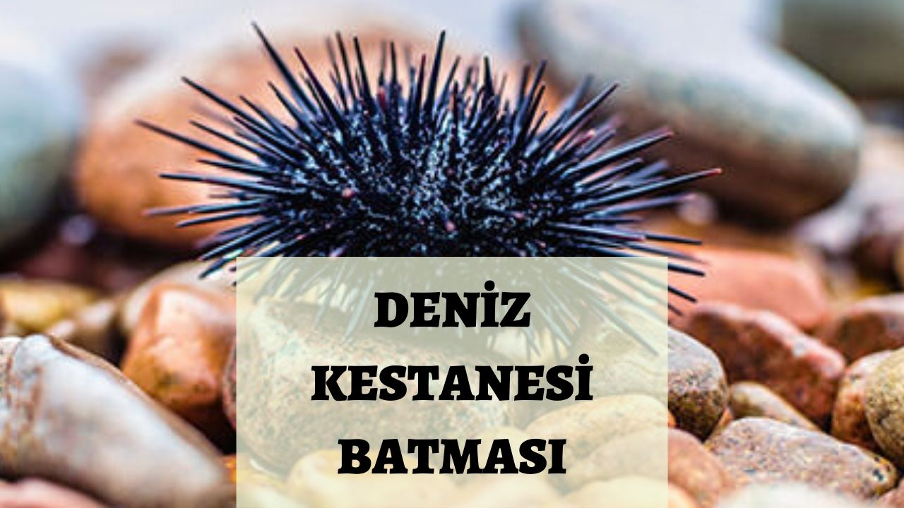 Photo of Deniz Kestanesi Batması